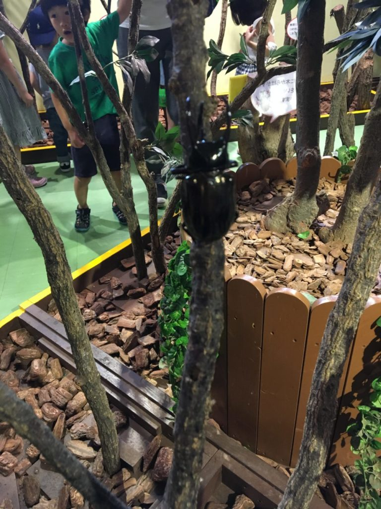 木に登るカブトムシ