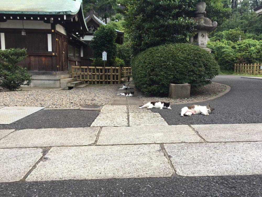境内で寝ている猫