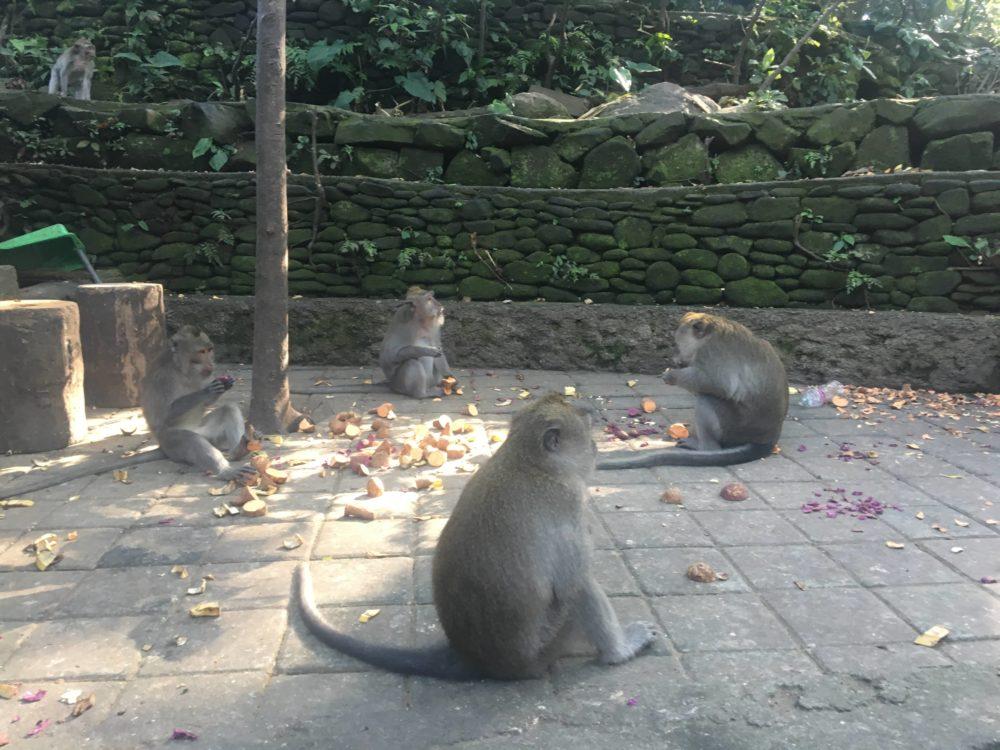 モンキーフォレスト内にいる猿1