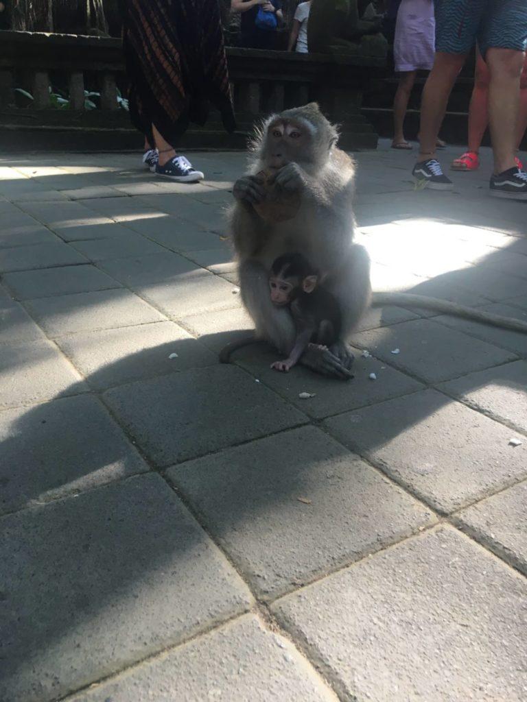モンキーフォレスト内にいる猿4