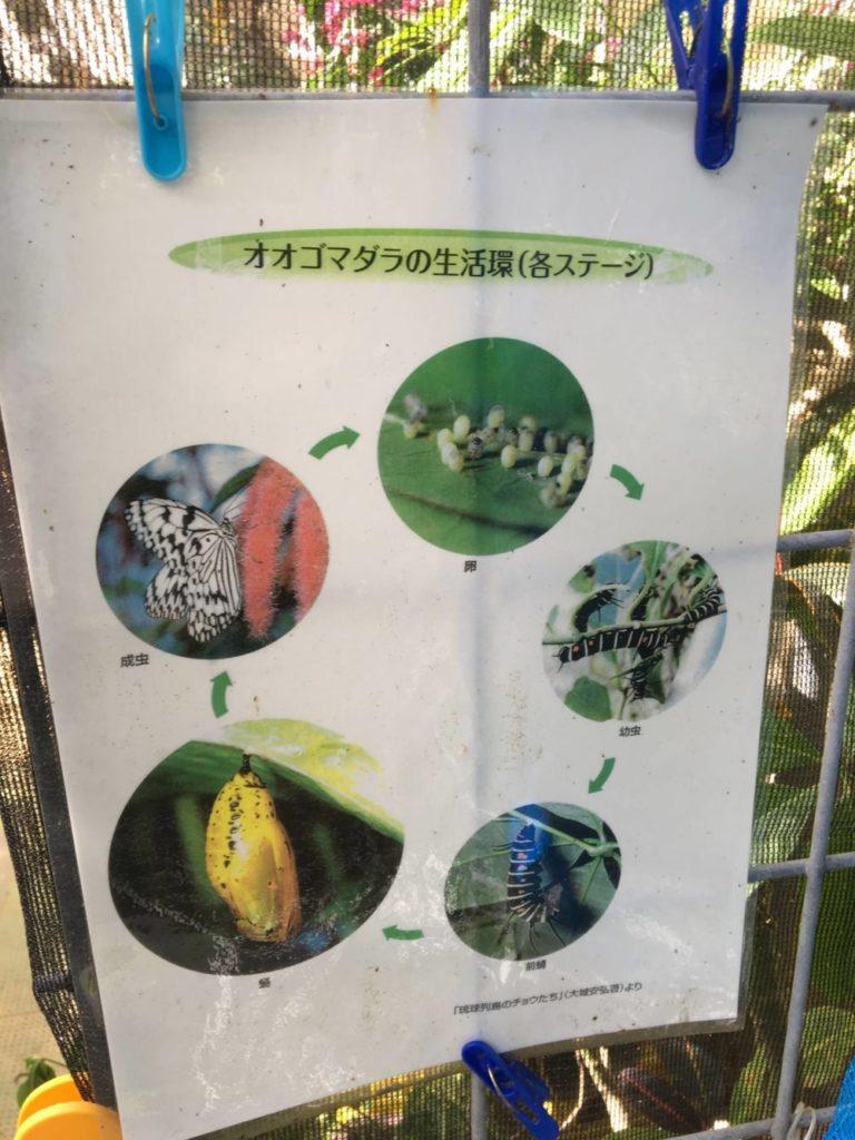 てだこチョウハウスに展示されている蝶に関する記事