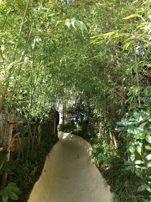来宮神社の楠への小路