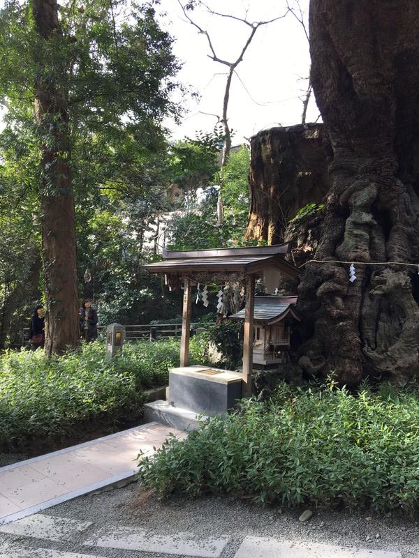 来宮神社の第二大楠