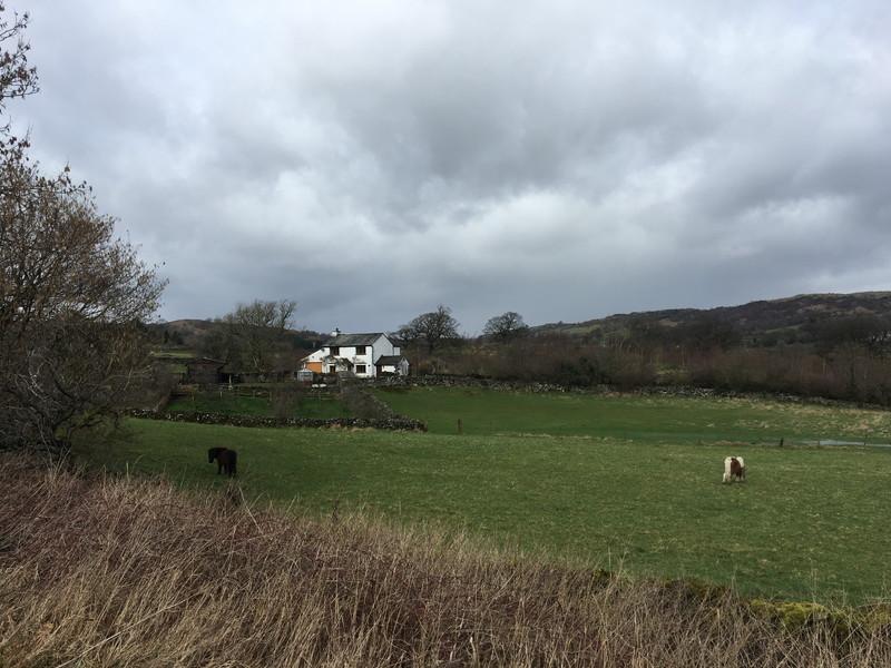 イギリス郊外の芝生の様子