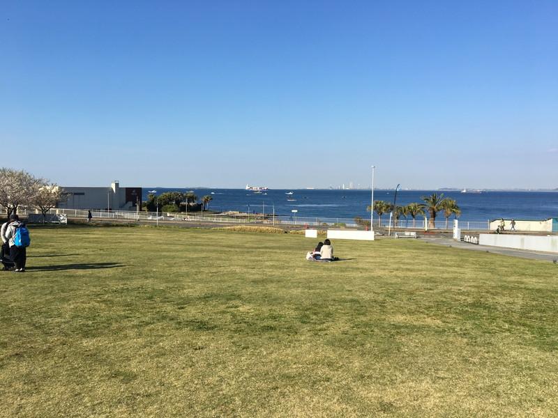 横須賀美術館の芝生の様子