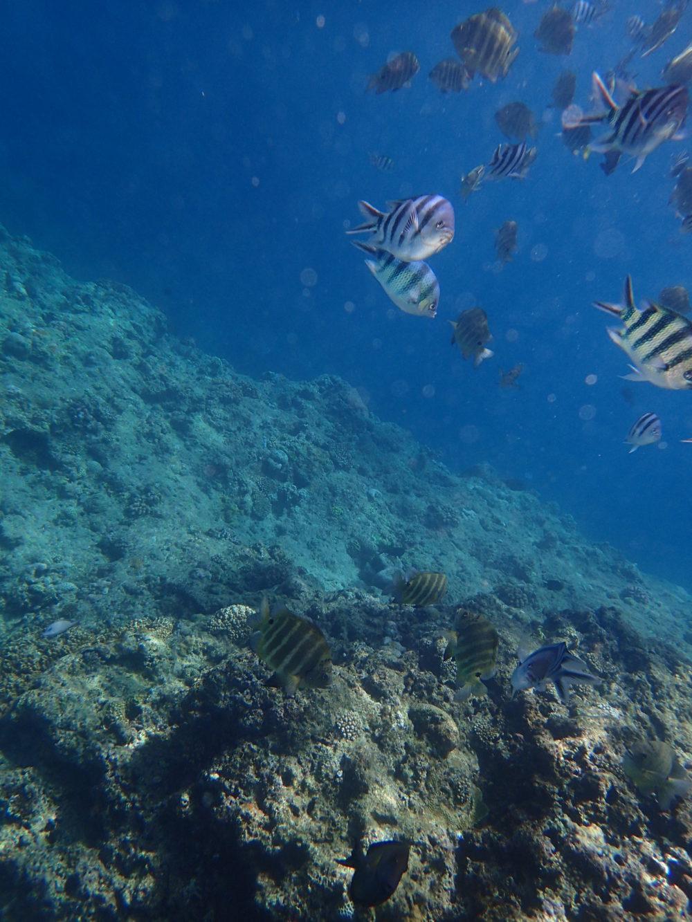 海中で泳ぐ魚