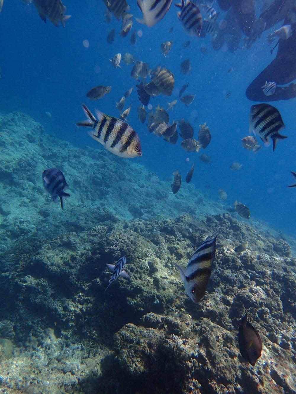海中で餌を食べる魚の群れ